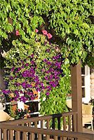 Porch and plants Stock Photo - Premium Royalty-Freenull, Code: 604-00937694