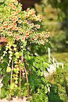 Plants Stock Photo - Premium Royalty-Freenull, Code: 604-00937697
