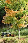 Tractor and tree Stock Photo - Premium Royalty-Free, Artist: Robert Harding Images, Code: 604-00941440