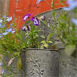 Flower Pot    Stock Photo - Premium Royalty-Free, Artist: Marnie Burkhart, Code: 600-00954475