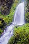 Wahkeena Falls, Columbia River Gorge National Scenic Area, Oregon, USA