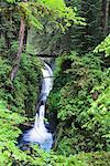 Sol Duc Falls, Olympic National Park, Washington, USA    Stock Photo - Premium Rights-Managed, Artist: F. Lukasseck, Code: 700-00983609