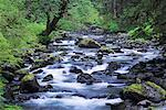 Sol Duc River, Olympic National Park, Washington, USA    Stock Photo - Premium Rights-Managed, Artist: F. Lukasseck, Code: 700-00983611
