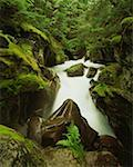 Avalanche Creek, Glacier National Park, Montana Stock Photo - Premium Royalty-Free, Artist: markskalny                    , Code: 621-01009372
