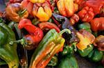 Multicolored Peppers Stock Photo - Premium Royalty-Free, Artist: G. Biss, Code: 621-01010937