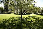 Tree in Yard    Stock Photo - Premium Rights-Managed, Artist: Jean-Yves Bruel, Code: 700-01072389