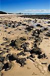 Rocky Beach, Moreton Island, Queensland, Australia    Stock Photo - Premium Rights-Managed, Artist: R. Ian Lloyd, Code: 700-01072508