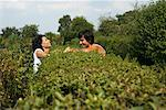 Couple Talking Over Hedge