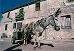 Close-up of a donkey cart on a road, Castile, Spain Stock Photo - Premium Royalty-Free, Artist: imagebroker, Code: 625-01095246