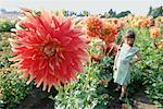 Girl Standing in Dahlia Field, Portland, Oregon