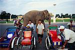 Bicycle Taxi Drivers, Elephant Walking Past in the Background, Phnom Penn, Cambodia
