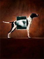 dog x-ray - Dog Standing Behind X-ray    Stock Photo - Premium Rights-Managednull, Code: 700-01112227