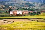 Rice Fields Near Behenjy, Madagascar    Stock Photo - Premium Rights-Managed, Artist: R. Ian Lloyd, Code: 700-01112613