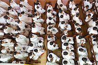 People Worshipping in Church, Soatanana, Madagascar    Stock Photo - Premium Rights-Managednull, Code: 700-01112718