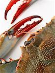 Blue Claw Crab's Head and Claws    Stock Photo - Premium Rights-Managed, Artist: Studio K, Code: 700-01123567