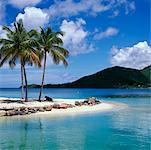 Palm Trees on Tropical Beach, Martinique, Antilles