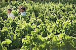 Father and Son in Vineyard    Stock Photo - Premium Rights-Managed, Artist: Masterfile, Code: 700-01195360