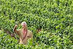 Portrait of Man in Vineyard    Stock Photo - Premium Rights-Managed, Artist: Masterfile, Code: 700-01195401