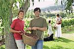 Family Collecting Grapes in Vineyard    Stock Photo - Premium Rights-Managed, Artist: Masterfile, Code: 700-01195410