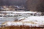 Red Crowned Cranes and Sika Deer in River, Hokkaido, Japan    Stock Photo - Premium Rights-Managed, Artist: Jeremy Woodhouse, Code: 700-01195753