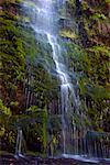 Close-Up of Waterfall, Victoria, Australia    Stock Photo - Premium Rights-Managed, Artist: JW, Code: 700-01236418