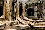 Ta Prohm Temple, Siem Reap, Cambodia    Stock Photo - Premium Rights-Managed, Artist: Jochen Schlenker, Code: 700-01248563