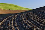 Plowed Field near Colfax, Palouse Region, Whitman County, Washington, USA