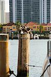 Three wood storks perching on a wooden post (mycteria americana) Stock Photo - Premium Royalty-Free, Artist: Glowimages               , Code: 625-01263287