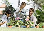 Family tending potted plants Stock Photo - Premium Royalty-Freenull, Code: 633-01274192