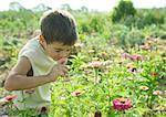 Boy smelling flower Stock Photo - Premium Royalty-Freenull, Code: 633-01274319