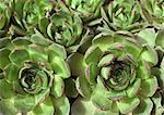 Hens and chicks Stock Photo - Premium Royalty-Free, Artist: Photocuisine, Code: 633-01274684