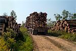 Loaded Logging Truck Driving Away    Stock Photo - Premium Rights-Managed, Artist: Sherman Hines, Code: 700-01295618