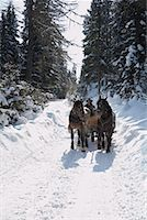 Sleigh Ride    Stock Photo - Premium Rights-Managednull, Code: 700-01296131
