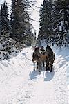 Sleigh Ride    Stock Photo - Premium Rights-Managed, Artist: Masterfile, Code: 700-01296131