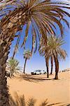 Palm Trees, Erg Ubari, Libya    Stock Photo - Premium Rights-Managed, Artist: F. Lukasseck, Code: 700-01345432