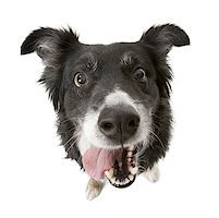 High angle view of a dog Stock Photo - Premium Royalty-Freenull, Code: 640-01349689