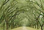 A tree lined road Stock Photo - Premium Royalty-Free, Artist: Mike Randolph, Code: 640-01359668