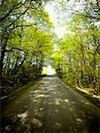 Trees along a road Stock Photo - Premium Royalty-Freenull, Code: 640-01360839