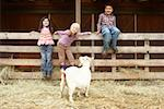 Three children (6-8) on wooden fence beside pygmy goat in pasture Stock Photo - Premium Royalty-Free, Artist: Photosindia, Code: 613-01393563