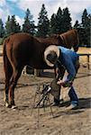Farrier shoeing horse, Oregon, USA Stock Photo - Premium Royalty-Free, Artist: ableimages, Code: 618-01409862