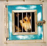 Dog Locked Up    Stock Photo - Premium Rights-Managednull, Code: 700-01459104