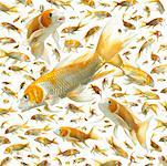 Carp (Cyprinus carpio) (Digital Composite) Stock Photo - Premium Royalty-Free, Artist: Minden Pictures, Code: 613-01535246