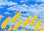 Wheat against blue sky with white clouds Stock Photo - Premium Royalty-Freenull, Code: 645-01538146