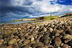 Rocky Beach and Dunstanburgh Castle, Northumberland, Northumbria, England, UK    Stock Photo - Premium Rights-Managed, Artist: Tim Hurst, Code: 700-01538954
