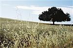 Field and tree Stock Photo - Premium Royalty-Free, Artist: Martin Ruegner, Code: 633-01572435