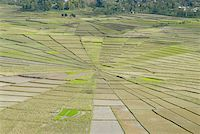 flores - Indonesia, Flores, near Ruteng, cobweb-shaped ricefields Stock Photo - Premium Royalty-Freenull, Code: 610-01577374