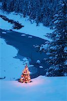 Christmas Tree Outdoors    Stock Photo - Premium Royalty-Freenull, Code: 600-01586843
