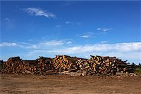 Logs, Ontario, Canada    Stock Photo - Premium Royalty-Freenull, Code: 600-01587034