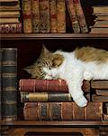 Cat Sleeping on Bookshelf    Stock Photo - Premium Rights-Managed, Artist: Nora Good, Code: 700-01595870