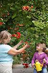 Grandmother and Granddaughter Gardening    Stock Photo - Premium Royalty-Free, Artist: Masterfile, Code: 600-01645179